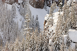 snowy canyon near White Pass, Wenatchee National Forest, Cascade Range, Washington, USA