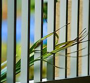 Wind blown Grass