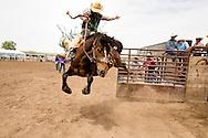 Saddle Bronc, Miles City Bucking Horse Sale, Miles City, Montana