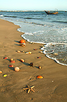 A wide variety of seashells wash up on Mui Ne Beach, which indicates the healthy waters in these parts.  In recent years Mui Ne has become the favourite beach town for Saigonese, wishing to avoid the city's crowds.