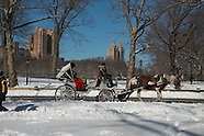 central park in white NY636A