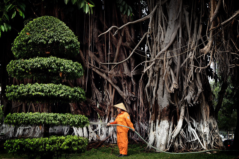 A gardener is douseing the trees in a public garden.