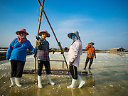 22 FEBRUARY 2017 - BAN LAEM, PETCHABURI, THAILAND: A crew of workers with a salt rake during the salt harvest in Petchaburi province of Thailand, about two hours south of Bangkok on the Gulf of Siam. Salt is collected in coastal flats that are flooded with sea water. The water evaporates and leaves the salt in large pans. Coastal provinces south of Bangkok used to be dotted with salt farms, but industrial development has pushed the salt farms down to remote parts of Petchaburi province. The harvest normally starts in early February and lasts until early May, but this year's harvest was delayed by a couple of weeks because of unseasonable rain in January that flooded many of the salt collection ponds.    PHOTO BY JACK KURTZ