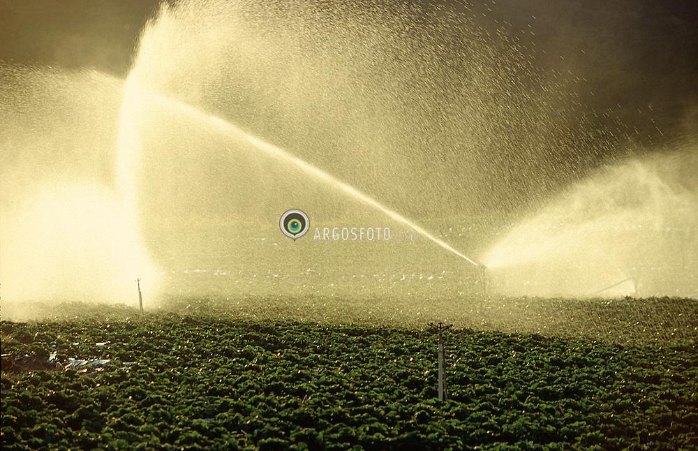 Atibaia, SP, Brasil. 2003.Irrigacao de lavoura de morangos./ Irrigation of strawberry fields..Foto Adri Felden/Argosfoto