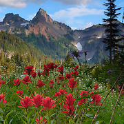 Colorful summer wildflowers, including Indian paintbrush, grow on a hillside overlooking Pinnacle Peak, located in the Tatoosh Range in Mount Rainier National Park, Washington.