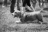 Dog Fest 2014 was held Sunday, June 8, 2014, at Angell Park in Sun Prairie, Wisconsin.