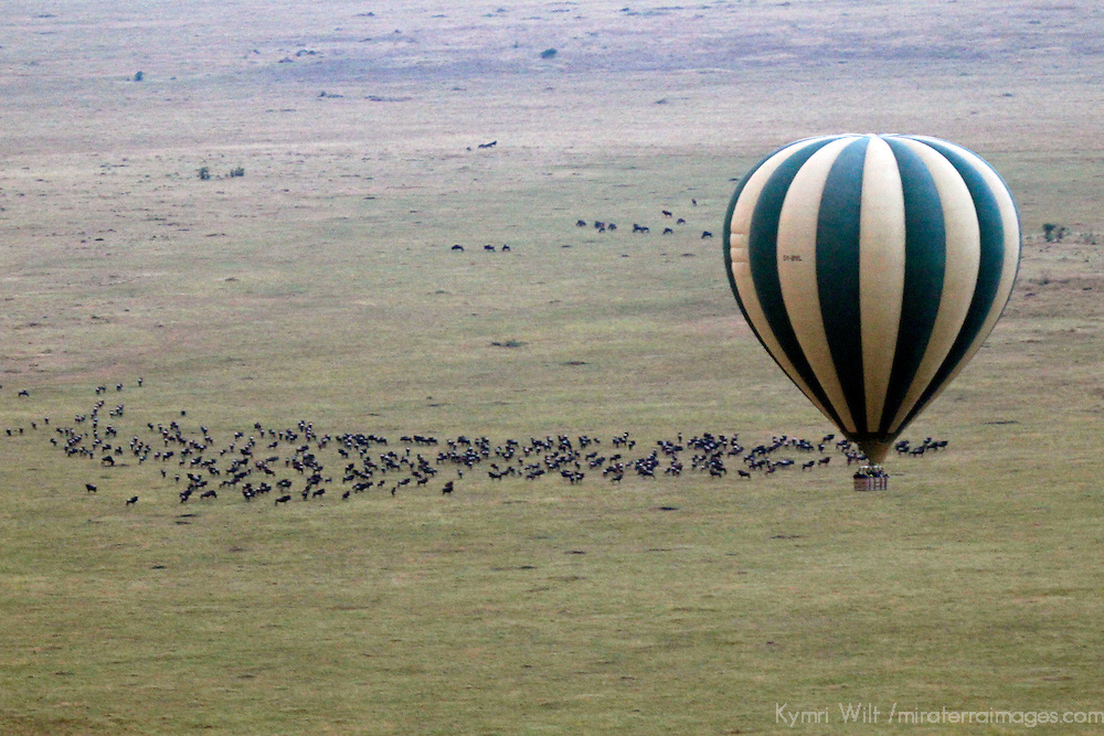Africa, Kenya, Masai Mara. Hot Air Ballooning over migrating wildebeest in the Maasai Mara.