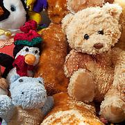 WA11689-00...WASHINGTON - Stuffed animals.