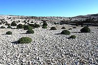 Landskap på øya Krk, landscape on the island, Krk
