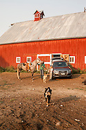 Ranch, cowgirl, saddling horse, barn, Montana