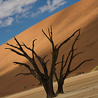 Dead tree in the Sossusvlei Dunes of Namibia.<br />