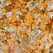 Lichen grows into polygons on sandstone polished by water, ice, and erosion in Zion National Park, Springdale, Utah, USA. The North Fork of the Virgin River carved spectacular Zion Canyon through reddish and tan-colored Navajo Sandstone up to half a mile (800 m) deep and 15 miles (24 km) long. Uplift associated with the creation of the Colorado Plateaus lifted the region 10,000 feet (3000 m) starting 13 million years ago. Zion and Kolob canyon geology includes 9 formations covering 150 million years of mostly Mesozoic-aged sedimentation, from warm, shallow seas, streams, lakes, vast deserts, and dry near-shore environments. Mormons discovered the canyon in 1858 and settled in the early 1860s. U.S. President Taft declared it Mukuntuweap National Monument in 1909. In 1918, the name changed to Zion (an ancient Hebrew name for Jerusalem), which became a National Park in 1919. The Kolob section (a 1937 National Monument) was added to Zion National Park in 1956. Unusually diverse plants and animals congregate here where the Colorado Plateau, Great Basin, and Mojave Desert meet.