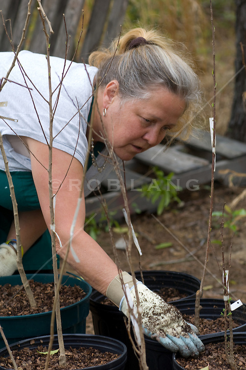 Mature woman working her potted plants
