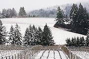 Winter snow over WillaKenzie Estate Vineyards, Yamhill-Carlton, Willamette Valley, Oregon