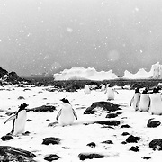 Photographs from the Antarctic Peninsula created by Anuar Patjane during spring 2015