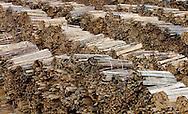 12/01/06 - NEUSSARGUES - CANTAL - FRANCE - GBMF. Groupe Bordet Maitres Feux. Entreprise de fabrication de charbon de bois - Photo Jerome CHABANNE