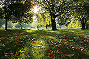 Autumn leaves in Eel Brook Common, Parsons Green, SW London