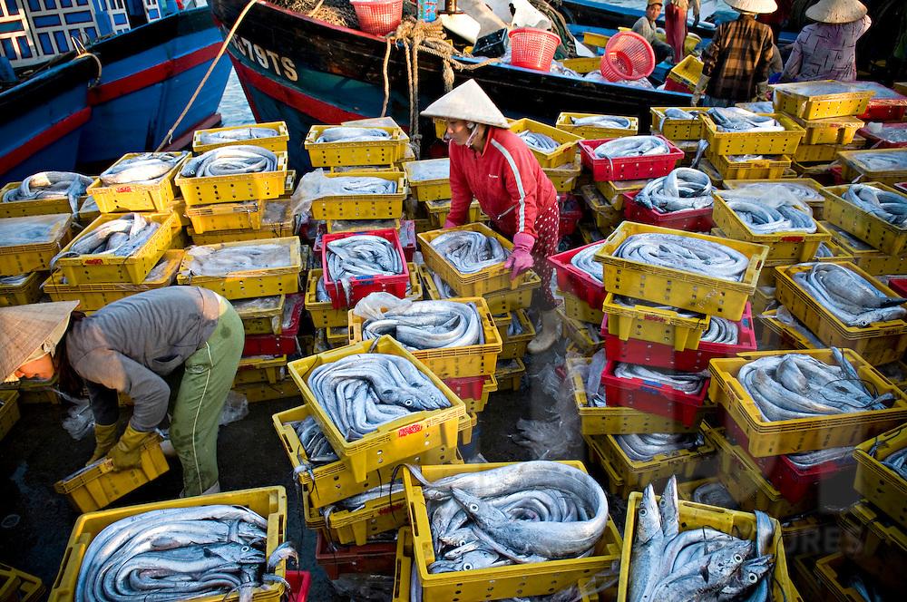 Экспорт морепродуктов из Вьетнама увеличится на 13 процентов в 2016 году