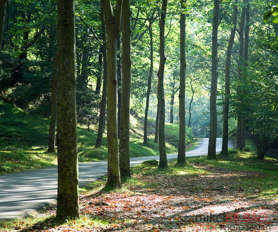road and forest.<br /> Ucieda Valley. Saja-Besaya Natural Park. Cantabria, Spain