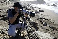 Eric Cheng photographs elephant seals