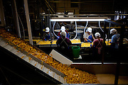 Diced peaches are checked at Wawona Frozen Foods in Fresno, Calif., September 24, 2012. Wawona provides fruit for the USDA school lunch program through a federal contract.