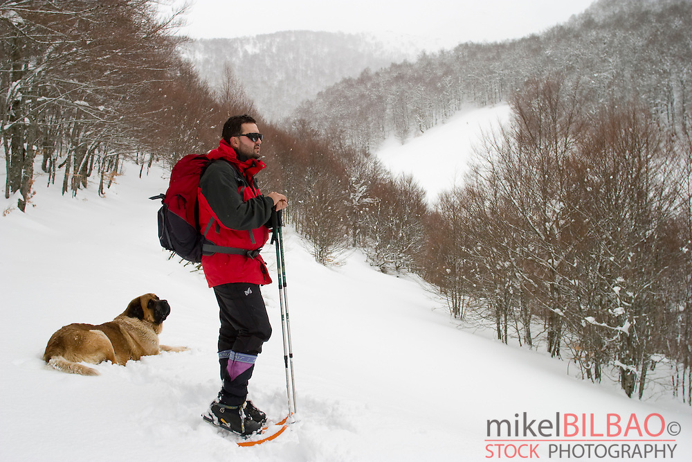 mountaineer with snowshoes and dog in a snow-capped forest moving forward in a slope.<br /> Road to Coriscao summit. Picos de Europa National Park. Cantabria. Spain. Europe