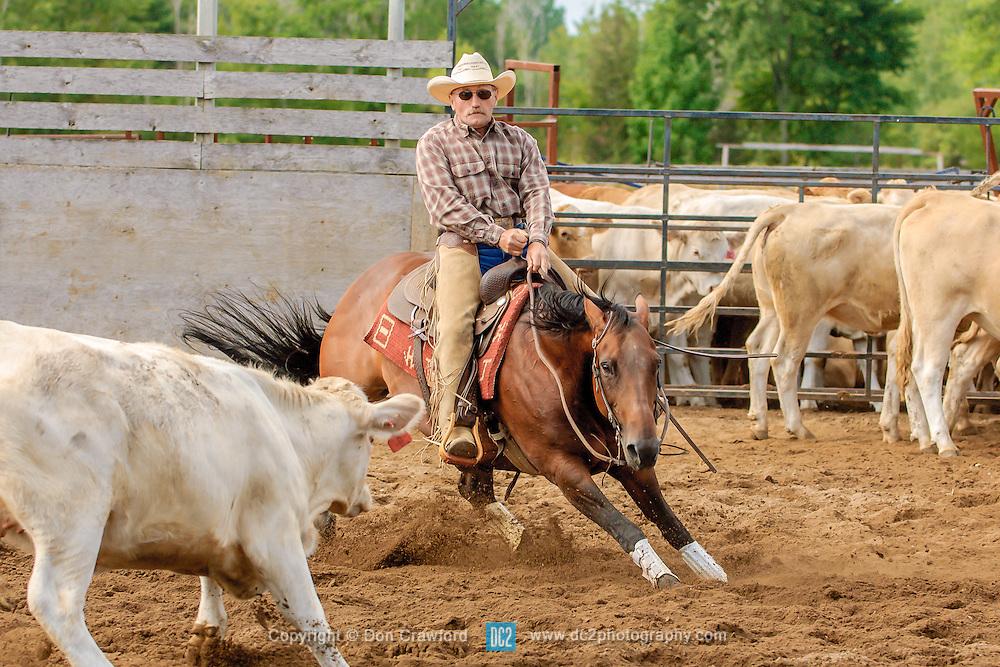 Cutting horses