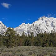 Grand Tetons, WY - Alpine Forest