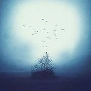 surreal misty lanndscape