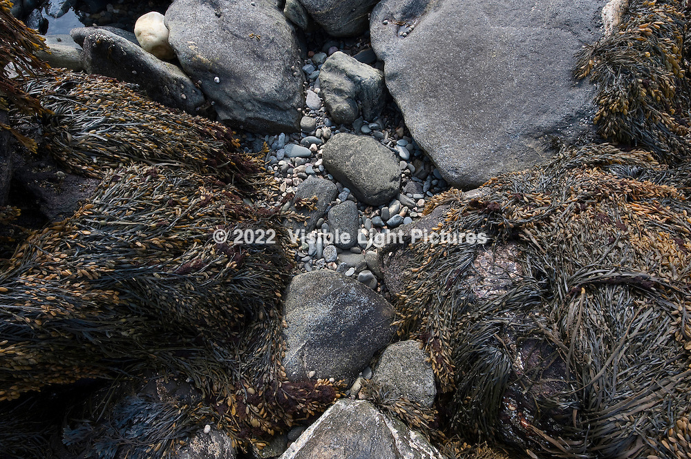 rocks with seaweed on the beach