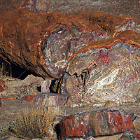 North America, USA, Arizona, Petrified Forest National Park. Crystal Forest petrified log.