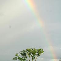 Rainbow over an acacia tree. Sweetwater Rehabilitacion Center in Northen Kenya.