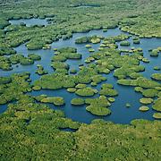 Marismas Nacionales es el manglar más extenso del Pacífico mexicano
