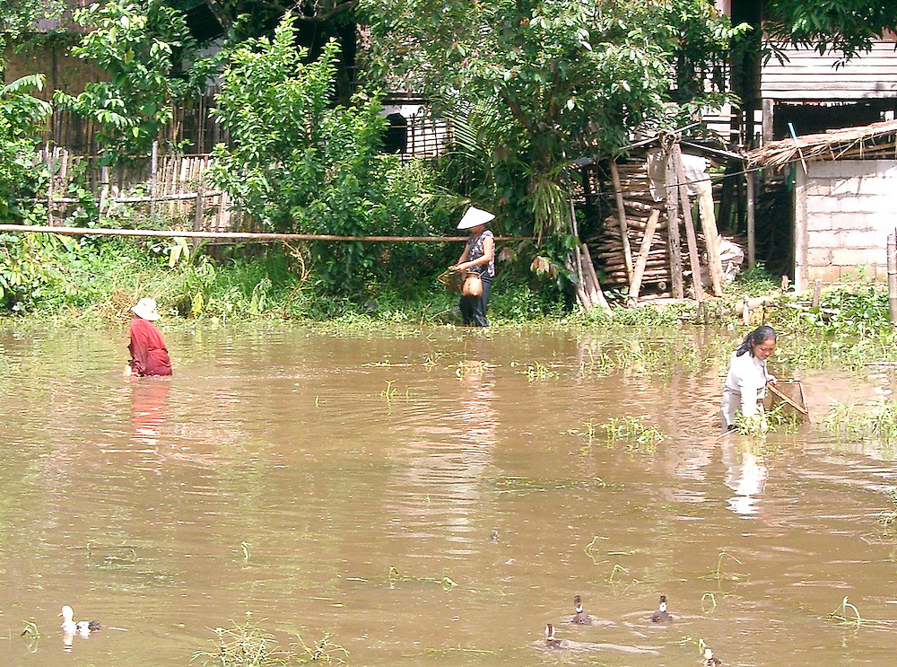 Tadpole farming in Laos