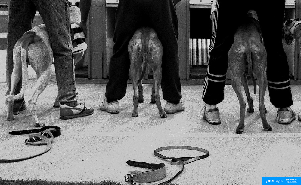 Greyhound trainers prepare to place their dogs in the traps at Wentworth Park Greyhound track, Sydney, Australia.