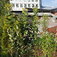 Landscapes with Native Plants