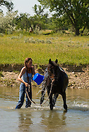 Woman cools down and washes quarter horse after riding, Little Bighorn River, Montana