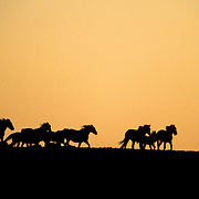 Wild horse at sunset in the Red Desert, Wyoming