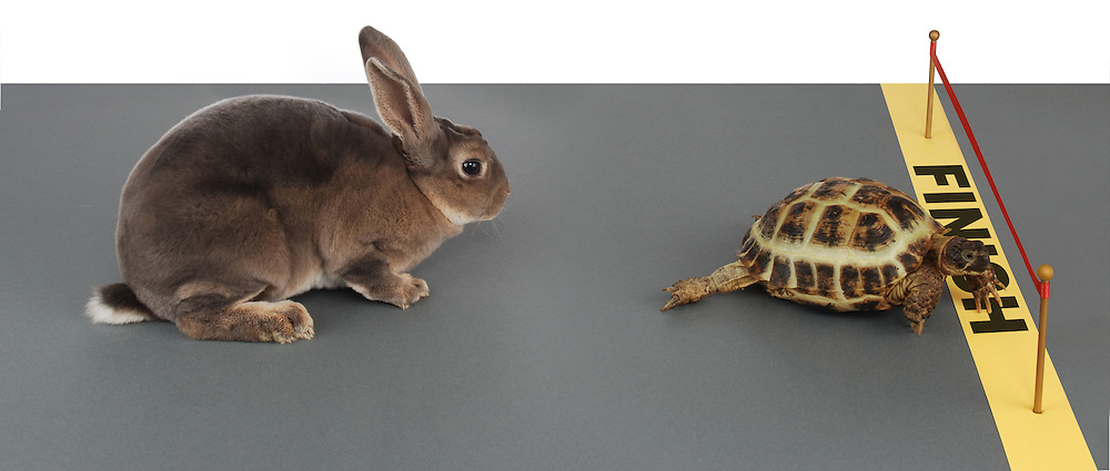 turtle winning the race against a rabbit