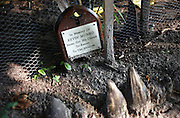 A makeshift shrine for a dead tourist who loved the Maldives and whose family left a memorial plaque on Naifaru Island.