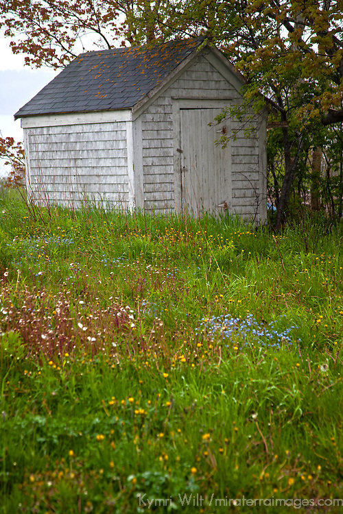 North America, Canada, Nova Scotia, Guysborough. A shed in a field of spring wildflowers.