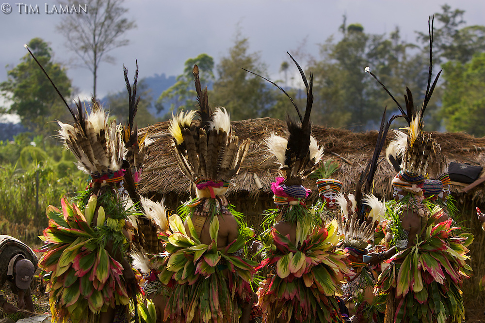 Members of a Western Highlands Province group prepare to perform in the cultural show.  They are wearing Bird of Paradise and other plumes in their headdresses..Mount Hagen, Western Highlands Province, Papua New Guinea.