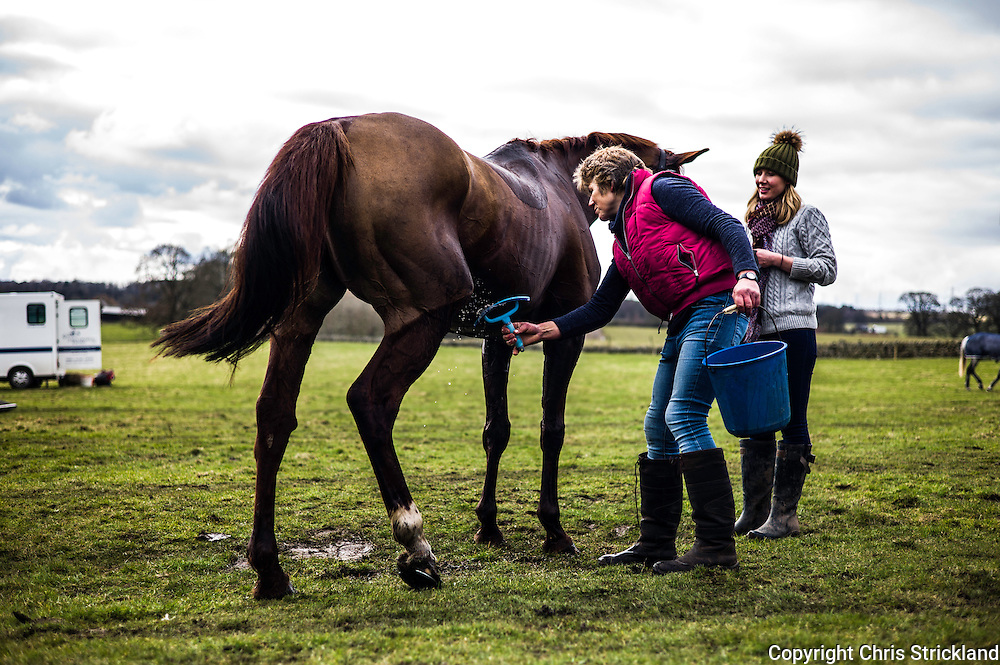 Corbridge, Northumberland, England, UK. 28th February 2016.  Racehorse Durban Gold enjoys a wash down after racing at the Tynedale Hunt annual Point to Point horse racing fixture.