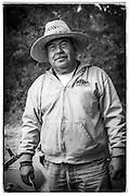 vineyard worker, Napa Valley