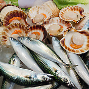 "Fresh scallops and fish are sold at the Rialto Pescheria, fish market. Venice (Venezia) is the capital of Italy's Veneto region, named for the ancient Veneti people from the 10th century BC. The romantic ""City of Canals"" stretches across 117 small islands in the marshy Venetian Lagoon along the Adriatic Sea in northeast Italy, Europe. The Republic of Venice wielded major sea power during the Middle Ages, Crusades, and Renaissance. Venice and the Venetian Lagoon are honored on UNESCO's World Heritage List."