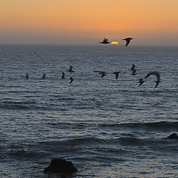 A flock of gulls fly over the rocky Pacific coast as the sun sets on another beautiful day along California's Highway 1.