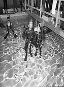 1982 - World Underwater Record Attempt.