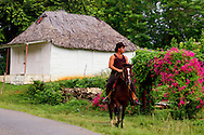 Man on horse riding past a house and pink flowers in San Vicente, Pinar del Rio, Cuba.
