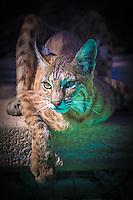 Craig W. Cutler Photography. <br /> DesignLIFE by Craig W. Cutler Photography.