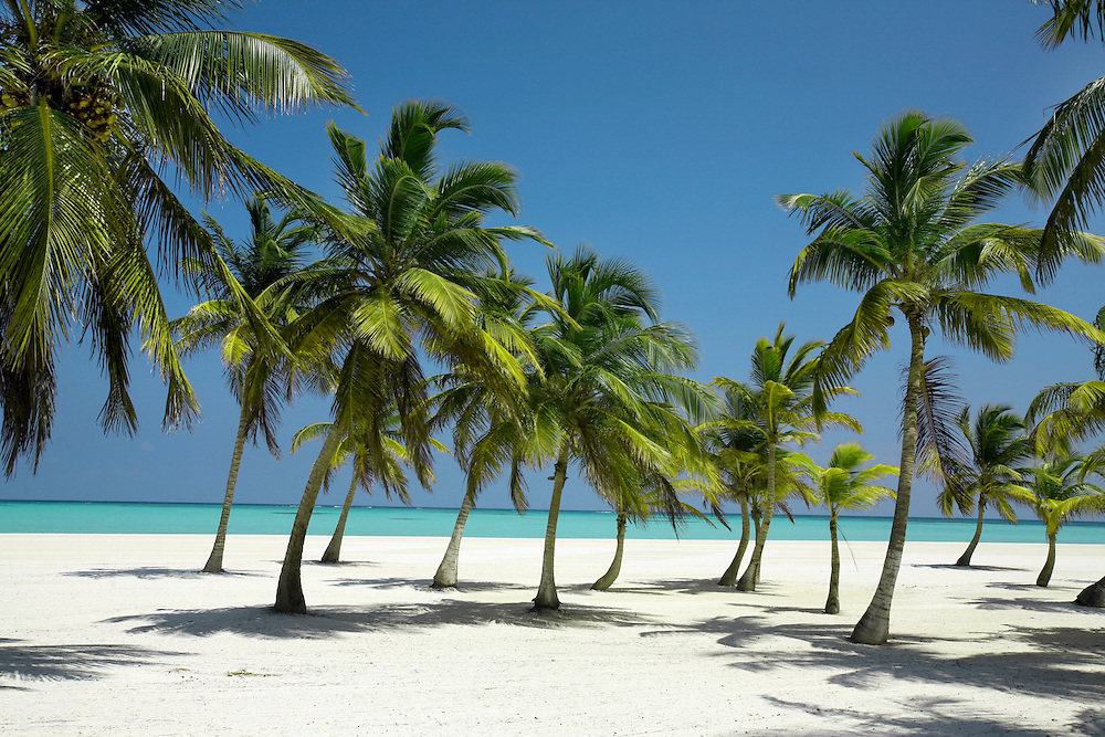 Dominican Republic Palm Trees | Logan MB - Photography